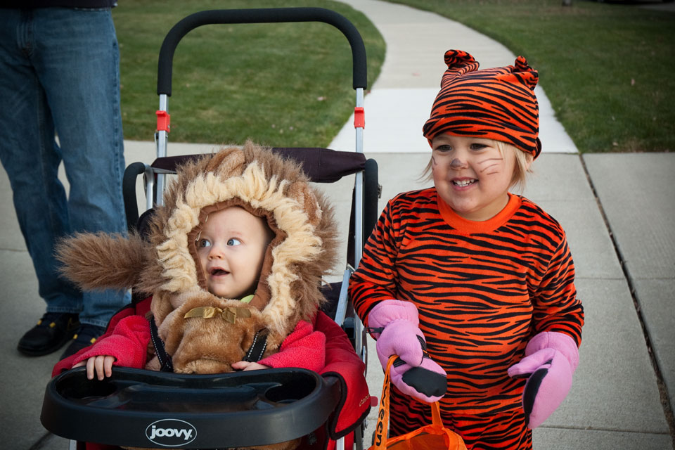 Baby Lion And The Tiger